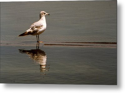 Gull Metal Print by Bob Whitt