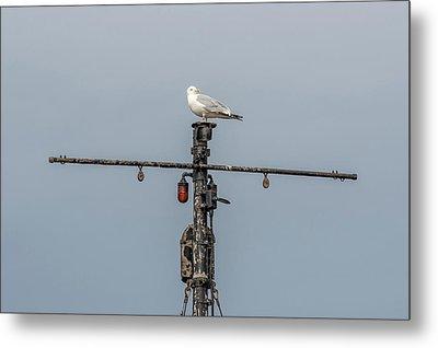 Gull On A Mast Metal Print by Paul Freidlund