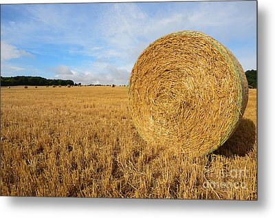 Harvest Metal Print by Stephen Smith