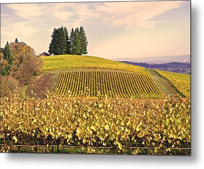 Harvest Time In A Vineyard Metal Print by Margaret Hood