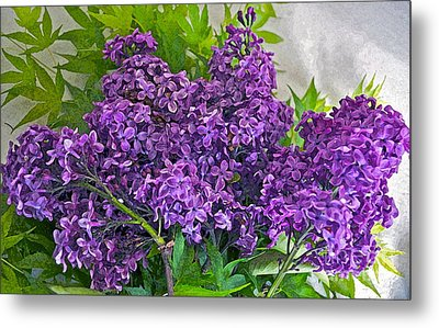 Harvesting Aroma Metal Print by Gwyn Newcombe