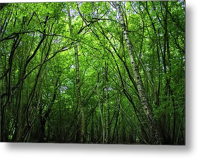 Hatfield Forest Metal Print by Martin Newman
