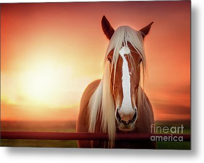 Have I Told You Lately That I Love You Metal Print by Tamyra Ayles