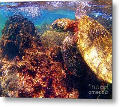 Hawaiian Sea Turtle - On The Reef Metal Print by Bette Phelan