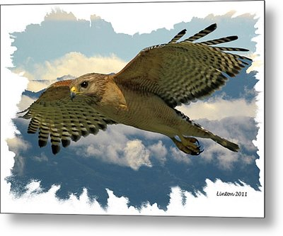 Hawk On The Wing Metal Print by Larry Linton