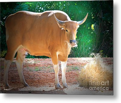 Hay There Metal Print by Judy Kay