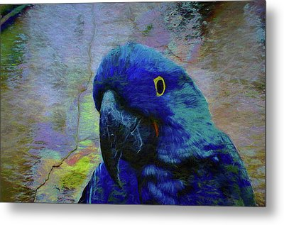 He Just Cracks Me Up Metal Print by Jan Amiss Photography