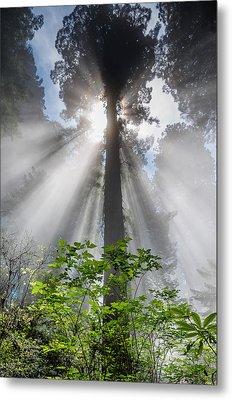 Heaven's Light Metal Print by Greg Nyquist