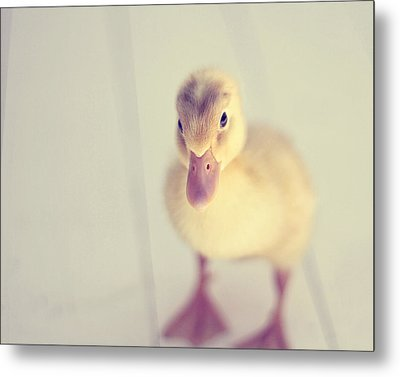 Hello Ducky Metal Print by Amy Tyler