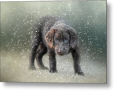 Her First Snow Metal Print by Jai Johnson