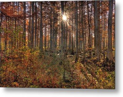 Heron Pond Cypress Trees Metal Print by Steve Gadomski