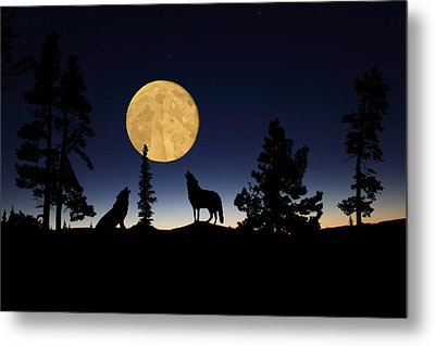 Hidden Wolves Metal Print by Shane Bechler