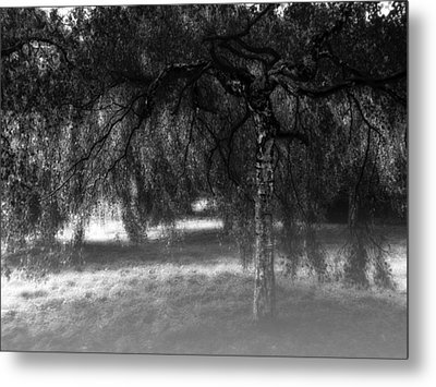 Hide And Seek Metal Print by Wim Lanclus