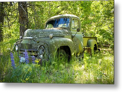 Hiding Metal Print by Idaho Scenic Images Linda Lantzy