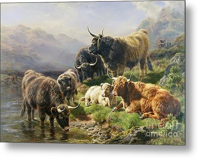 Highland Cattle Metal Print by William Watson