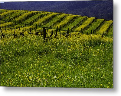 Hills Of Mustard Grass Metal Print by Garry Gay