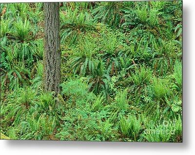 Hillside Ferns Metal Print by Greg Vaughn - Printscapes