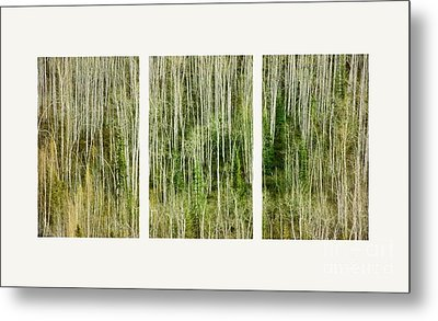Hillside Forest Metal Print by Priska Wettstein
