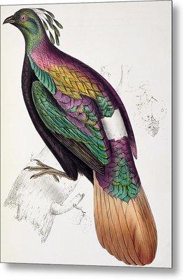 Himalayan Monal Pheasant Metal Print by John Gould