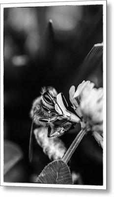 Honey Bee Metal Print by James Bull
