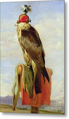 Hooded Falcon Metal Print by Sir Edwin Landseer