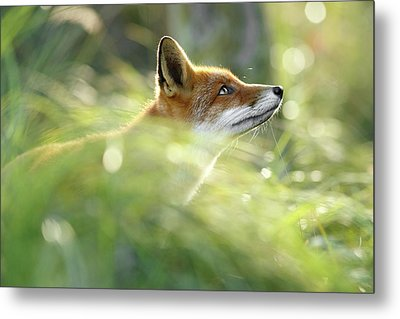 Hope - All Good Things Come From Above Metal Print by Roeselien Raimond