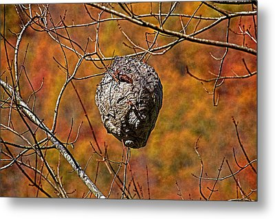 Hornet's Nest Metal Print by HH Photography of Florida