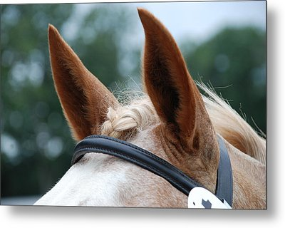 Horse At Attention Metal Print by Jennifer Ancker