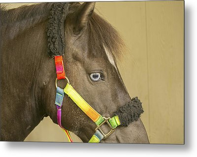 Horse Metal Print by Michel DesRoches
