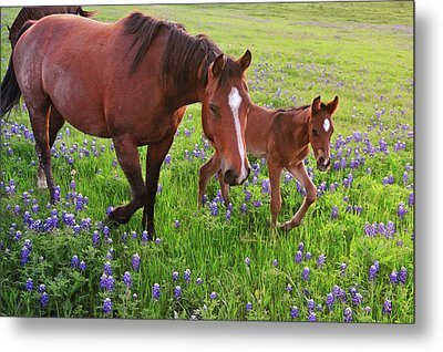 Horse On Bluebonnet Trail Metal Print by David Hensley