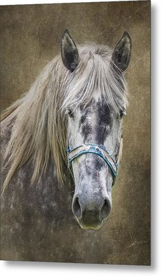 Horse Portrait I Metal Print by Tom Mc Nemar