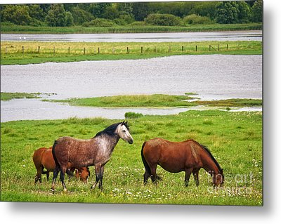 Horses, North Sea  Metal Print by Angela Doelling AD DESIGN Photo and PhotoArt