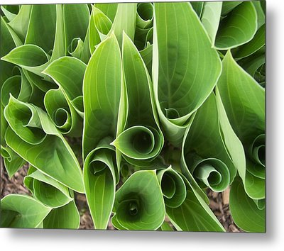 Hostas 4 Metal Print by Anna Villarreal Garbis