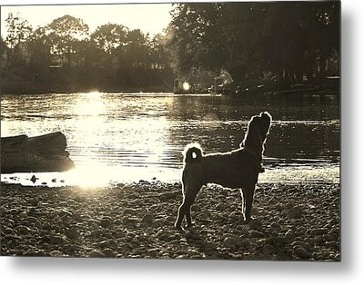 Howl At The Sun Metal Print by Denise Irving