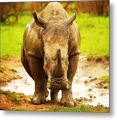 Huge South African Rhino Metal Print by Anna Om