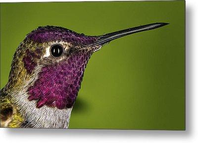 Hummingbird Head Shot With Raindrops Metal Print by William Lee