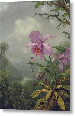 Hummingbird Perched On An Orchid Plant Metal Print by Martin Johnson Heade