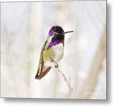 Hummingbird Metal Print by Rebecca Margraf