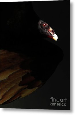 I Saw The Vulture In My Dreams Again Metal Print by Wingsdomain Art and Photography