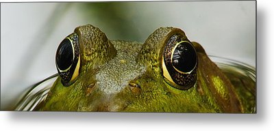 I See You Metal Print by Michael Peychich