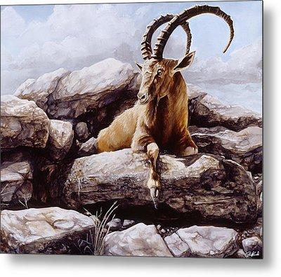 Ibex Metal Print by Steve Goad