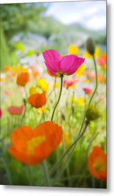 Iceland Poppies Metal Print by Silke Magino