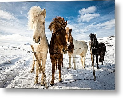 Icelandic Hair Style Metal Print by Mike Leske