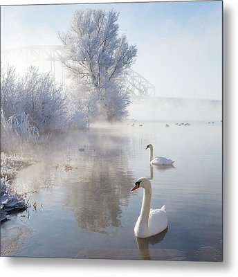 Icy Swan Lake Metal Print by E.M. van Nuil