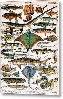 Illustration Of Ocean Fish Metal Print by Alillot