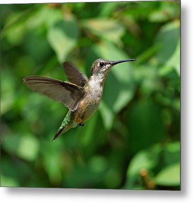 In Flight Metal Print by Sandy Keeton