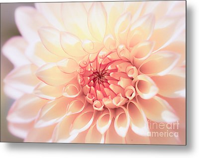 In Love With Dahlia Metal Print by Ana V  Ramirez