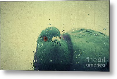 In The Rain... Metal Print by Angela Doelling AD DESIGN Photo and PhotoArt