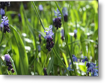 In The Wild Metal Print by Connie Handscomb