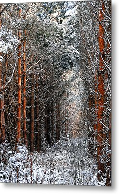 In To The Light Metal Print by Svetlana Sewell